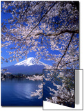 Květy sakury a hora Fudži Plakát