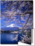 Kwitnąca wiśnia na tle góry Fuji Plakaty