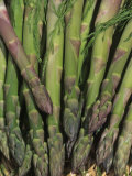 Mary Washington Variety of Asparagus in a Harvest Basket (Asparagus Officinalis) Photographic Print by Wally Eberhart