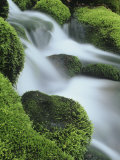 Small Mountain Stream and Moss-Covered Rocks, Great Smoky Mountains National Park, Tennessee, USA Photographic Print by Adam Jones