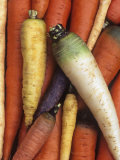 A Variety of Carrots, Daucus Carota Photographic Print by David Cavagnaro