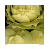 Buzzy's Roses Impression giclée par Pip Bloomfield