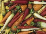 Genetic Variation and Diversity in Carrots, Daucus Carota Photographic Print by David Cavagnaro
