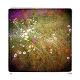Daisy Field Limited Edition by Rebecca Tolk