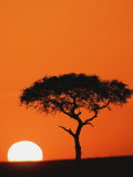 Accacia Tree Silhouetted at Sunrise, Masai Mara Game Reserve, Kenya Photographic Print by Adam Jones