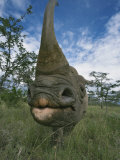 Wide Angle View of a Black Rhinoceros Horn and Face, Diceros Bicornis, Kenya, Africa Photographic Print by Adam Jones