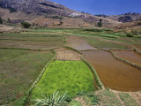 Rice Paddies, Oryza Sativa, Andrambaky Mountain, Madagascar, Africa Photographic Print by Gerald & Buff Corsi