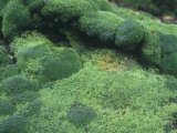 Mossy Rocks on the Forest Floor, North America Fotografie-Druck von Walt Anderson