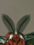 Antenna and Face of Male Cecropia Moth, Hyalophora Cecropia Photographic Print by Charles Melton