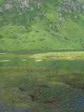 Red Salmon Spawning (Oncorhynchus Nerka), Kodiak Island, Alaska, USA Photographic Print by Richard Herrmann