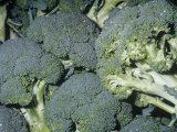 Broccoli (Brassica Oleracea Botrytis), Native to the Mediterranean Region Photographic Print by Ken Lucas