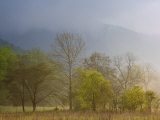 Foggy Spring Morning, Cades Cove, Great Smoky Mountains National Park, Tennessee Photographic Print by Adam Jones