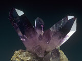 Amethyst Crystals Photographic Print by Mark Schneider