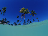 Coconut Palms on the Sandy Beach, Indonesia, Wakatobi Dive Resort, Sulawesi, Indian Ocean, Bandasea Photographic Print by Reinhard Dirscherl
