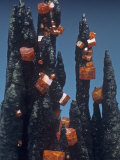Vanadinite Crystals on Goethite, Taouz, Morocco, Africa Photographic Print by Mark Schneider