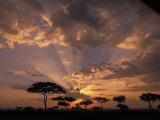 Crepuscular Sun Rays and Acacia Trees at Twilight, Masai Mara Game Reserve, Kenya, Africa Photographie par Gerald &amp; Buff Corsi