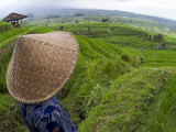 An Indonesian Worker Looks Out over Terraced Rice Paddies in the Interior of Bali, Indonesia Lmina fotogrfica por David Fleetham