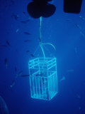 Diver in Shark Cages, Mexico, Pacific Ocean, Guadalupe Photographic Print by Reinhard Dirscherl