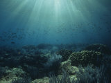 Sunlight Through Ocean Water Above Corals, Sea of Cortez, Mexico Photographic Print by David Wrobel