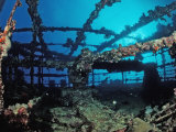 Scuba Diver Diving on Umbria Shipwreck, Sudan, Africa, Red Sea, Wingate Reef Photographic Print by Reinhard Dirscherl