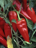 Peppers, Hot Shot Variety Photographic Print by David Cavagnaro