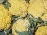 Cauliflower Variety Cheddar Cheese (Brassica Oleracea Var. Botrytis) Native to Mediterranean Region Photographic Print by Ken Lucas