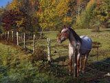 Horse in a Fenced Pasture with Fall Colors in the Background, North Carolina, USA Photographic Print by Adam Jones
