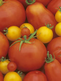 Variety of Tomato Types (Lycopersicon Esculentum) Photographic Print by Wally Eberhart