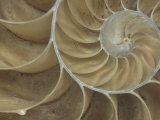 Details of a Sectioned Chambered Nautilus Shell (Nautilus), South Pacific Ocean Photographic Print by Mark Schneider