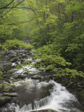 Mountain Stream in Early Spring, Great Smoky Mountains National Park, Tennessee Photographic Print by Adam Jones