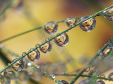 Autumn Leaves Reflected in Raindrops on Blades of Grass, Acadia National Park, Me Photographic Print by Adam Jones