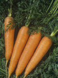 Carrots are Vegetables with a Tap Root (Daucus Carota) Photographic Print by Wally Eberhart