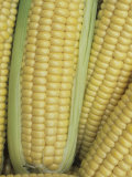 Sweet Corn, Northern Extrasweet Variety Photographic Print by Wally Eberhart