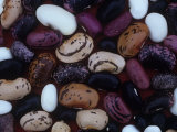 Scarlet Runner Bean Varieties, Phaseolus Coccineus Photographic Print by David Cavagnaro
