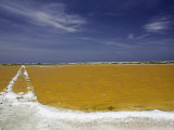 Salt Crusted Shoreline of a Salt Pan Near Lac Bay, Bonaire, Netherlands Antilles, Caribbean Photographic Print by David Fleetham