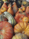 Harvest of Winter Squash Photographic Print by David Cavagnaro