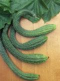Cucumber, Suyo Long, Burpless Photographic Print by Wally Eberhart