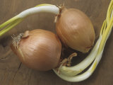 Sprouting Onion Bulbs, Allium Photographic Print by Jeff Daly