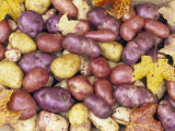Heirloom Potato Varieties Photographic Print by David Cavagnaro
