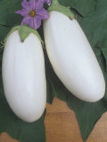 Eggplant, Ghost Buster Photographic Print by Wally Eberhart