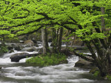 Mountain Stream in Spring, Great Smoky Mountains N.P. TN Photographic Print by Adam Jones