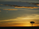 Acacia Tree Silhouetted at Sunrise, Masai Mara, Kenya Photographic Print by Adam Jones
