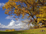 Single Tree and Distant Southern Appalachian Mountains in the Fall, North Carolina, USA Photographic Print by Adam Jones
