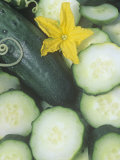 Cucumber, Sweet Success Photographic Print by Wally Eberhart