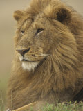 An Adult Male Lion, Panthera Leo, Masai Mara Game Reserve, Kenya, Africa Fotografie-Druck von Adam Jones