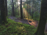 Sunlight Streaming Through Hardwood Forest on Path to Laurel Falls, Great Smoky Mountains N.P. TN Photographic Print by Adam Jones
