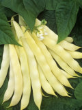 Wax Beans, &#39;Romano 264&#39; Photographic Print by Wally Eberhart