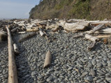 Rounded Beach Cobbles and Driftwood, Olympic Coast, Washington, USA Photographic Print by Marli Miller