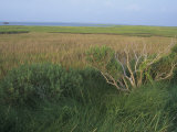 Saltmarsh Habitat, Chincoteague National Wildlife Refuge, Virginia, USA Photographic Print by Rob & Ann Simpson