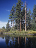 Ponderosa Pines on the Shore of a Mountain Lake, Pinus Ponderosa, Western North America Photographic Print by Gerald & Buff Corsi